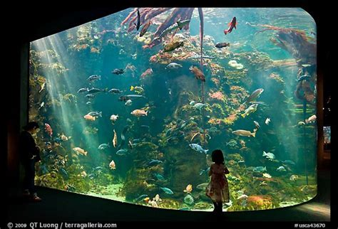 picture photo looks at northern california aquarium california academy of sciences san