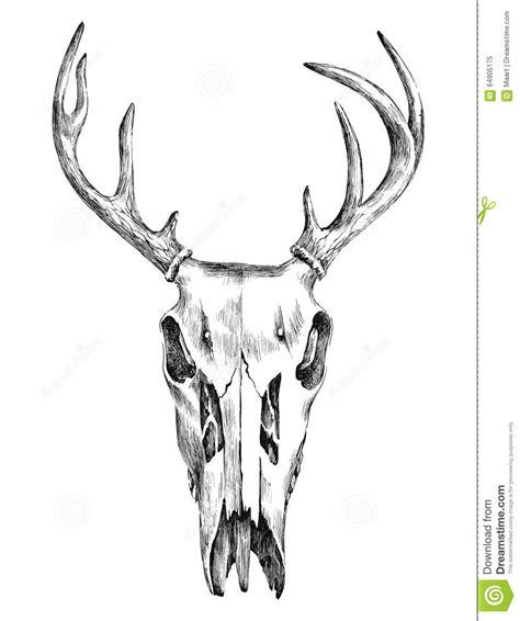 Hand Drawn Black White Deer Scull Stock Vector Image