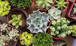 Le 5 piante da balcone per chi ha il pollice Nero! LEITV