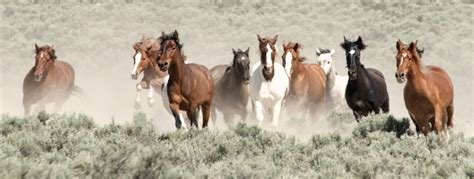 best bureau de change federal agency votes to slaughter 65 of the horses