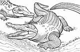 Crocodile Coloring Pages Alligator Print Animals Children Realistic Animal sketch template