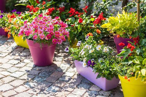 container garden ideas sun 4 diy container garden ideas for spring mesa awning