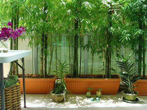 bambou geant en pot comment planter des bambous dans jardin archzine fr