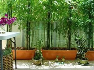 Bambous En Pot : comment planter des bambous dans son jardin ~ Melissatoandfro.com Idées de Décoration