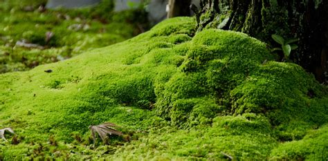 Images Of Moss What S Japan S Moss Obsession