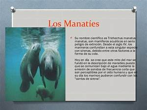 Animal En G : animales acu ticos en peligro de extinci n ~ Melissatoandfro.com Idées de Décoration