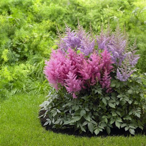 shade plants perennial flowers for shade gardens hgtv
