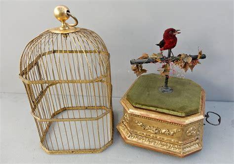uccelli in gabbia gabbia uccelli gabbia uccelli voliera social