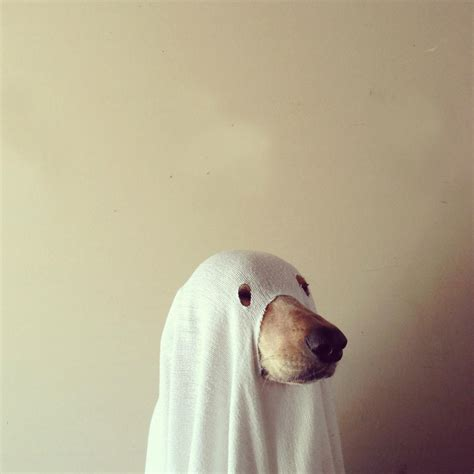 Ghost Dog Pictures, Photos, and Images for Facebook ...