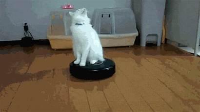 Vacuum Cleaner Funny Procrastination Cat Roomba Clean