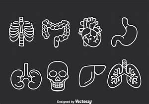 Intestine Free Vector Art