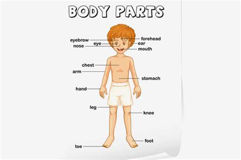 teaching body parts  children