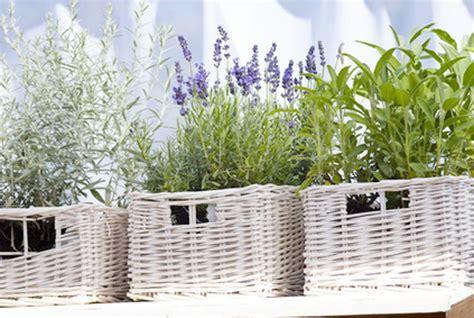 Was Hilft Gegen Fliegen Auf Der Terrasse by Pflanzen Gegen Fliegen Was Hilft Gegen Fliegen Auf Der