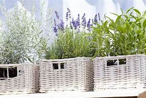 Fliegen Vertreiben Wohnung : jubelis diese pflanzen vertreiben insekten ~ Whattoseeinmadrid.com Haus und Dekorationen