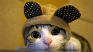 cat in a hat cats in hats are winning