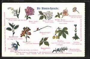 Blumen Und Ihre Bedeutung : yashiro1asaji ~ Frokenaadalensverden.com Haus und Dekorationen