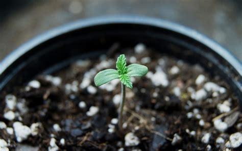 How To Find The Best Soil For Growing Cannabis