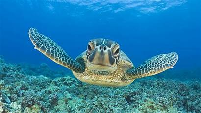 Turtle Wallpapers 4k Backgrounds 1128 Animals Resolution