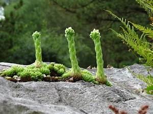 Pflanzen Für Steingarten : die richtigen pflanzen f r den steingarten ~ Michelbontemps.com Haus und Dekorationen