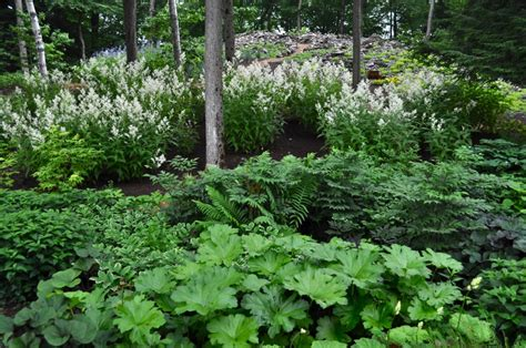 woodland border plants plant lover s garden hyland garden design gardens pinterest sloped garden plants and