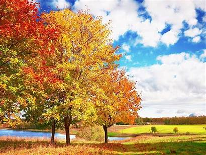 Trees Wallpapers Backgrounds Des Refuses Salon
