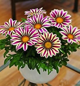 Blumen Für Schattigen Balkon : 21 balkonpflanzen die zu ihrem eingenen balkon passen ~ Frokenaadalensverden.com Haus und Dekorationen