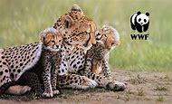 South African Wildlife Animal Paintings