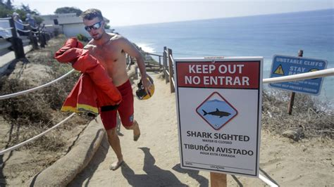 Shark attacks 13-year-old boy diving for lobster near a ...