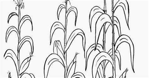 contoh gambar mewarnai daun jagung
