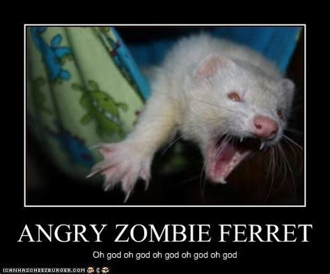 Ferret Memes - zombie ferret funny sayings with animals other
