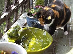 Solar frosch katzen forum for Feuerstelle garten mit balkon absturzsicherung katzen