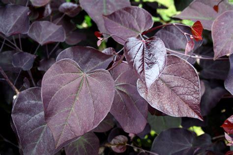 Plant Preview Brilliant Tree Leaf Color