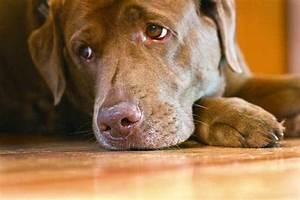 Do Dogs Get Seasonal Affective Disorder in the Winter ...