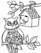 Coloring Bird Pages Owl Birdhouse Printable Sheet Adult Printables Button Through Tocolor Grab Feel Could Well Right sketch template