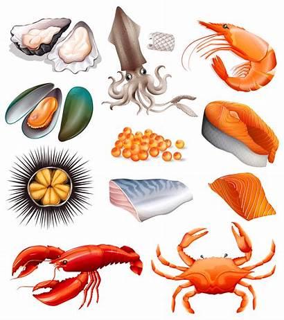 Seafood Background Vector Cartoon Graphics Vectors Premium