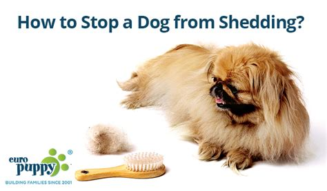 how to stop shedding care archives europuppy