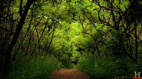 Background Greenery Wallpaper by Beautiful Lush Greenery Hd Wallpapers Wonderwordz