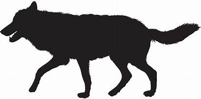 Wolf Silhouette Clip Clipart Silhouettes Transparent Gray