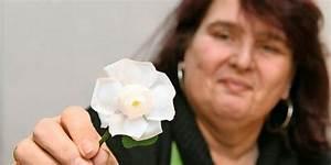 Deutsche Kunstblume Sebnitz : kunstblume sebnitz fertigt hunderte wei e rosen f r den 13 februar ~ Eleganceandgraceweddings.com Haus und Dekorationen