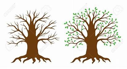 Tree Leaves Clipart Without Thick Branch Strong