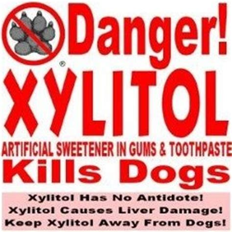 xylitol toxicity state street animal hospital pc state