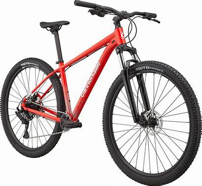 Cannondale Trail Hardtail 2021 Bike Mountain Rally
