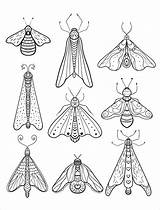 Coloring Moth Insect Adult Printable Animal Insects Adults Sheets Wiring Diagram Colouring Boat Bug Advanced Patterns Alumacraft Rocks Embroidery Nerdymamma sketch template