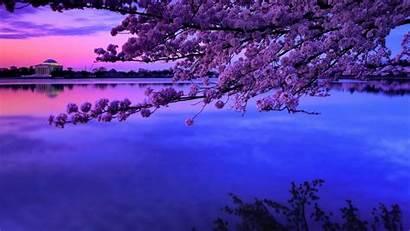 Blossom Cherry Background Tree Backgrounds Japanese Desktop
