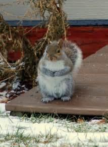 Squirrel Nests Winter