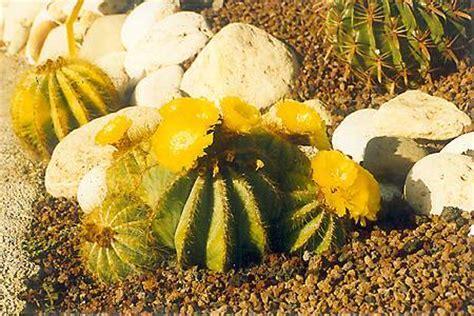 lade per coltivazione giardino botanico isola d elba residence cala dei peducelli
