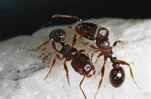 Featured Creature: Ants!   Green Pest Solutions