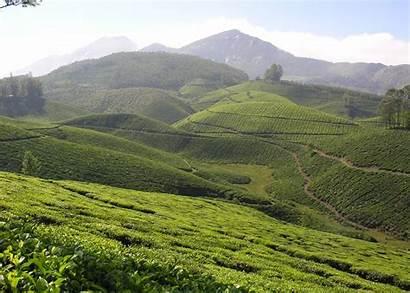 Munnar India Kerala Maldives Visit Tea Cochin