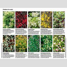 267 Best Images About Winter Garden & Shrubs On Pinterest