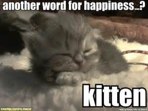 another name for cat kitten another word for happiness kitten happy cat